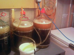 The two Saison wort carboys with yeast pitched and getting ready for high krausen!