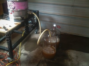Running off 10 gallons of Saison wort into two carboys for the experiment.